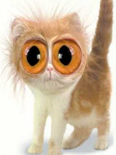 Картинки по запросу Глаза кошек смешные картинки