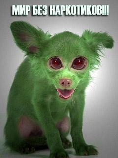 Зелёная собака мир без наркотиков